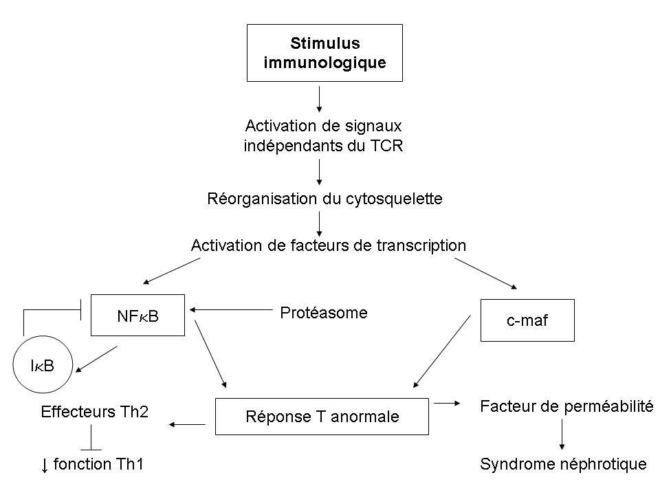 Ducloux D 2009 Syndrome dAlport Rénales La symptomatologie rénale débute chez H vers lâge de 5 ans protéinurie et une hématurie microscopique avec parfois des épisodes dhématurie macroscopique Une HTA et une insuffisance rénale apparaissent plus tard.