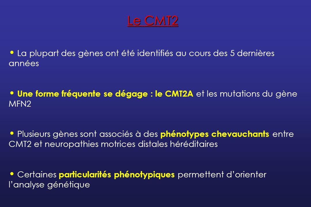 Classification des CMT2 ClassificationGèneProtéineRôle de la protéinePhénotypeParticularités CMT2A KIF1B- Kinesin family member 1BTransport axonalCMT21 seule famille japonaise CMT2AMFN2Mitofusine 2Fusion mitochondrialeCMT2Atrophie optique Signes pyramidaux CMT2BRAB7Ras-associated protein 7Trafic des endosomesCMT2Ulcères, Infections, Amputations CMT2CInconnu CMT2Atteinte des CV, du diaphragme CMT2DGARSGlycyl-tRNA synthetaseAccrochage de lAA glycine sur son ARNt CMT2 dHMN Atteinte prédominante des mains CMT2ENF-LNeurofilament light chainCytosquelette axonalCMT2 CMT1 CMT2FHSPB1Heat shock protein 27Chaperonne mitochondrialeCMT2 dHMN CMT2GInconnu CMT2 CMT 2H/KGDAP1Ganglioside-induced differentiation-associated protein 1 Glutathion transférase mitochondriale CMT2 ou intermédiaire Cordes vocales CMT2 I/JMPZProtéine 0Myéline compacteCMT2 ou intermédiaire Pupille dAddie CMT2LHSPB8Heat shock protein 22Chaperonne mitochondrialeCMT2 dHMN