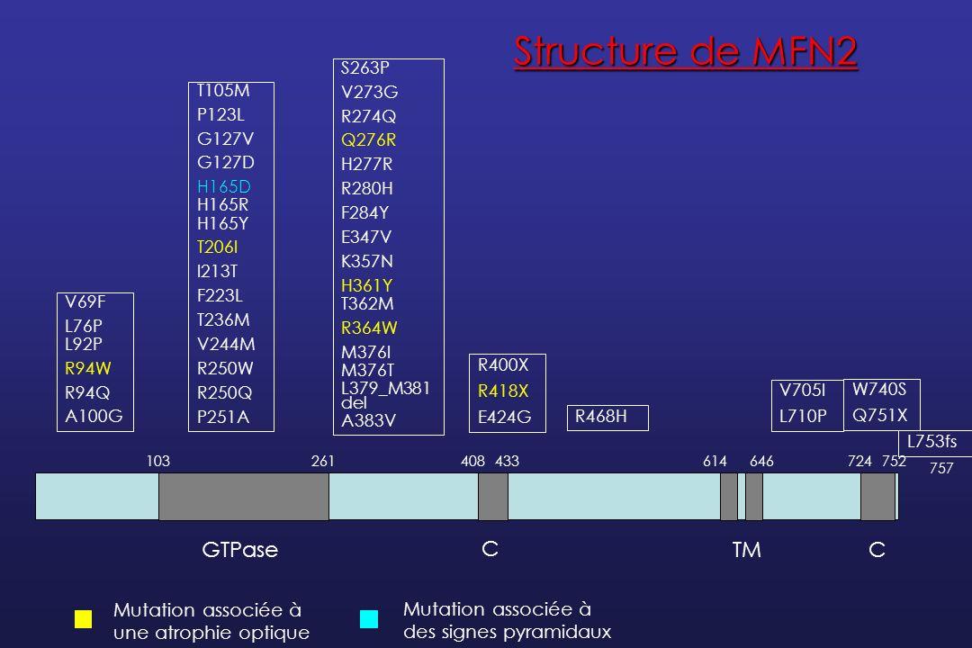 Hypothèses physiopathologiques Mutants MFN2 dans des GDR en culture : agrégation des mitochondries dans les corps cellulaires et les portions proximales des axones Altération de la mobilité des mitochondries Taux dATP intracellulaire normal : pas de dysfonction de la chaîne respiratoire La liaison des mitochondries à leur transporteurs pourrait être affectée Ceci explique la susceptibilité des portions les plus distales de laxone (Baloh et al, J Neuroscience, 2007)