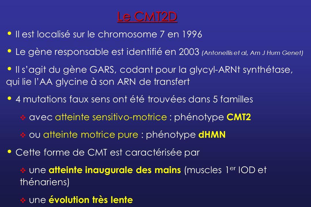 NH2 _ C _ _ _ C _ _ O H OH _ H ARN de transfert spécifique de la glycine (ARNt Gly ) Aminoacyl-ARNt synthétase spécifique de la glycine Acide aminé (glycine) La protéine mutée