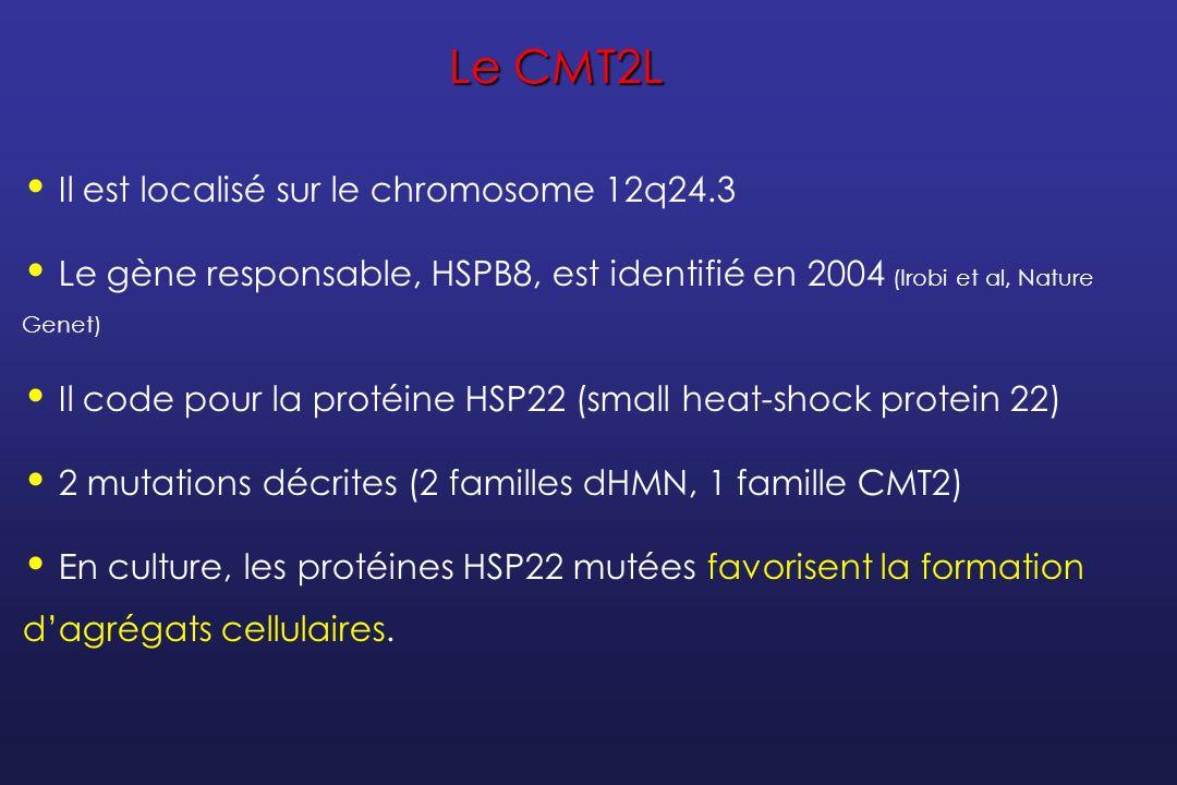 Les petites protéines heat-shock Elles peuvent former des dimères, des hétérodimères ou des structures oligomériques plus complexes ; Les mutations de HSP22 et HSP27 induisent des interactions anormalement augmentées avec la protéine WT et avec les autres protéines heat-shock ; Ceci pourrait favoriser la formation dagrégats intracellulaires Et la dégénérescence axonale progressive...