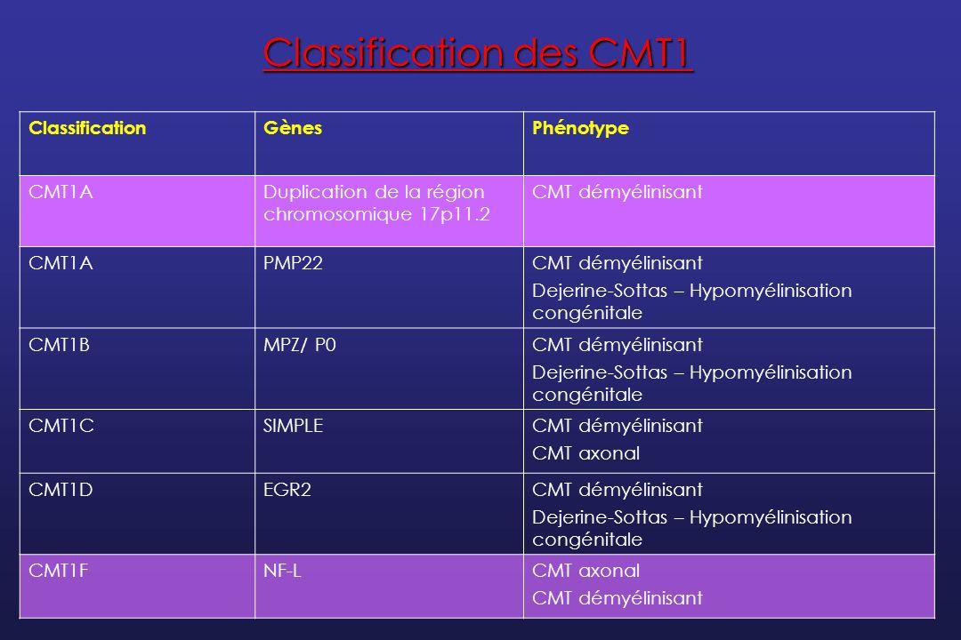 Les patients CMT1A ont 3 copies du gène PMP22 Effet de dosage génique Le CMT1A 17p (Normal) 17p (Dupliqué) 3 Mb 1,5 Mb PMP22