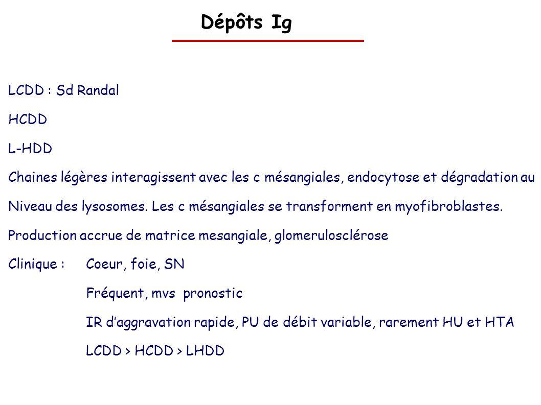 Dépôts Ig LCDD : Sd Randal HCDD L-HDD Chaines légères interagissent avec les c mésangiales, endocytose et dégradation au Niveau des lysosomes. Les c m