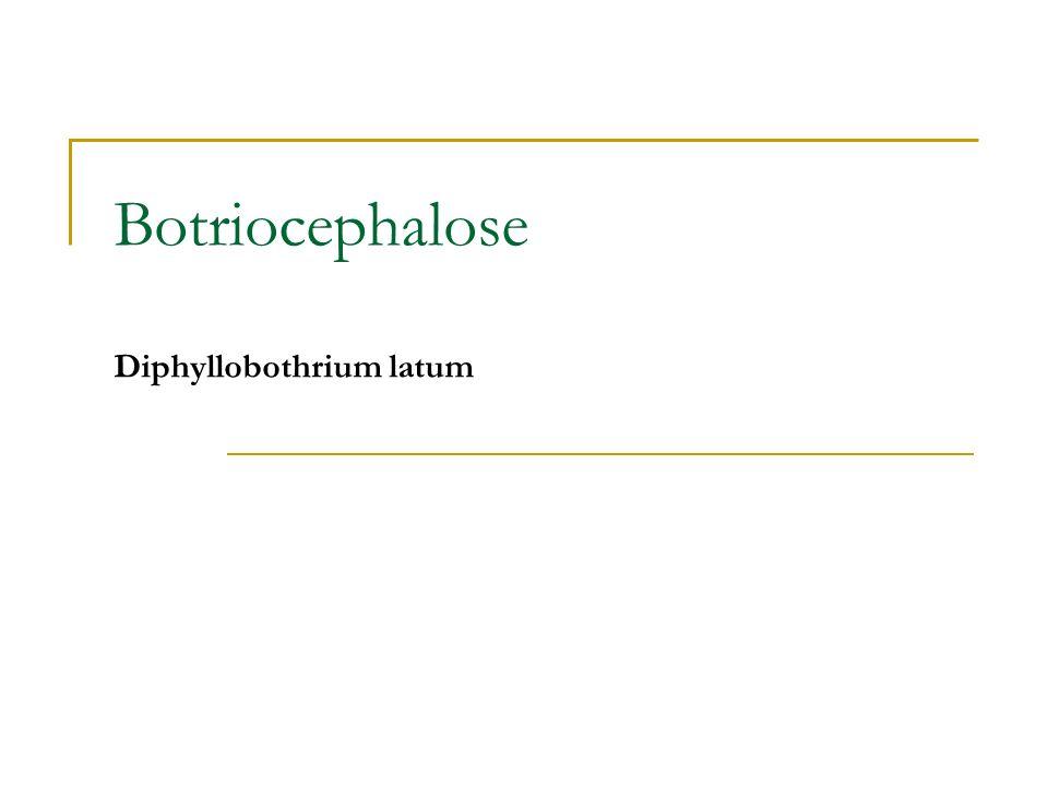 Botriocephalose Diphyllobothrium latum