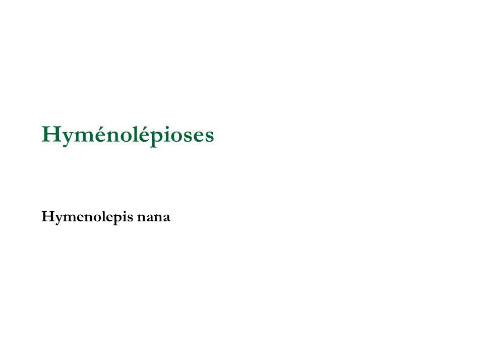 Hyménolépioses Hymenolepis nana