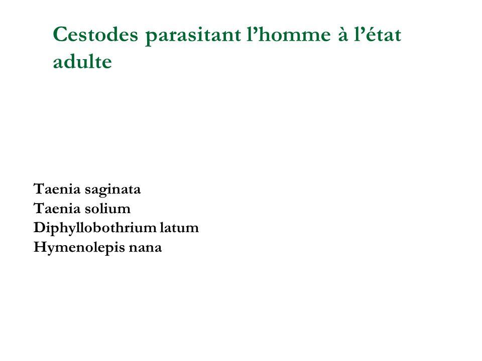Téniasis Taenia saginata (ténia du bœuf) Taenia solium (ténia du porc)