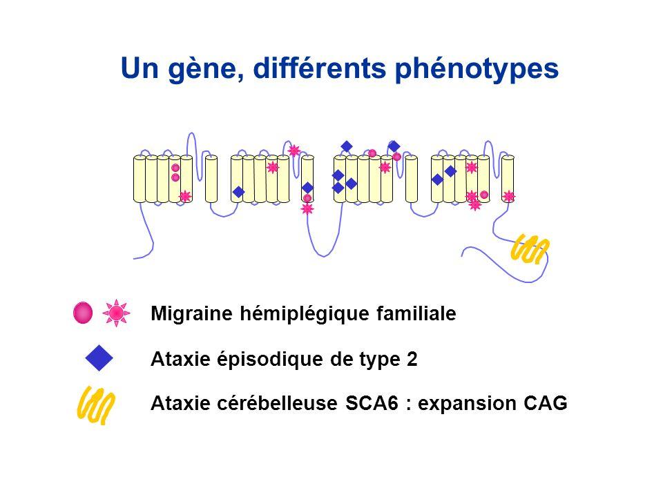 Migraine hémiplégique familiale Ataxie épisodique de type 2 Ataxie cérébelleuse SCA6 : expansion CAG Un gène, différents phénotypes