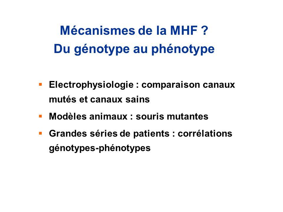 Mécanismes de la MHF ? Du génotype au phénotype Electrophysiologie : comparaison canaux mutés et canaux sains Modèles animaux : souris mutantes Grande