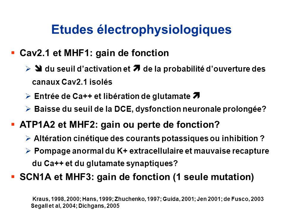 Etudes électrophysiologiques Cav2.1 et MHF1: gain de fonction du seuil dactivation et de la probabilité douverture des canaux Cav2.1 isolés Entrée de