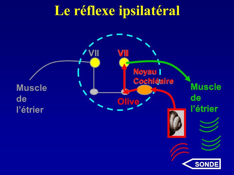 Le réflexe ipsilatéral VII Noyau Cochléaire Muscle de létrier Muscle de létrier Muscle de létrier Olive Noyau Cochléaire VII SONDE