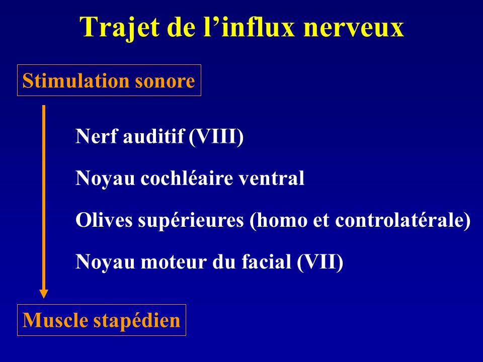Trajet de linflux nerveux Nerf auditif (VIII) Noyau cochléaire ventral Olives supérieures (homo et controlatérale) Noyau moteur du facial (VII) Muscle