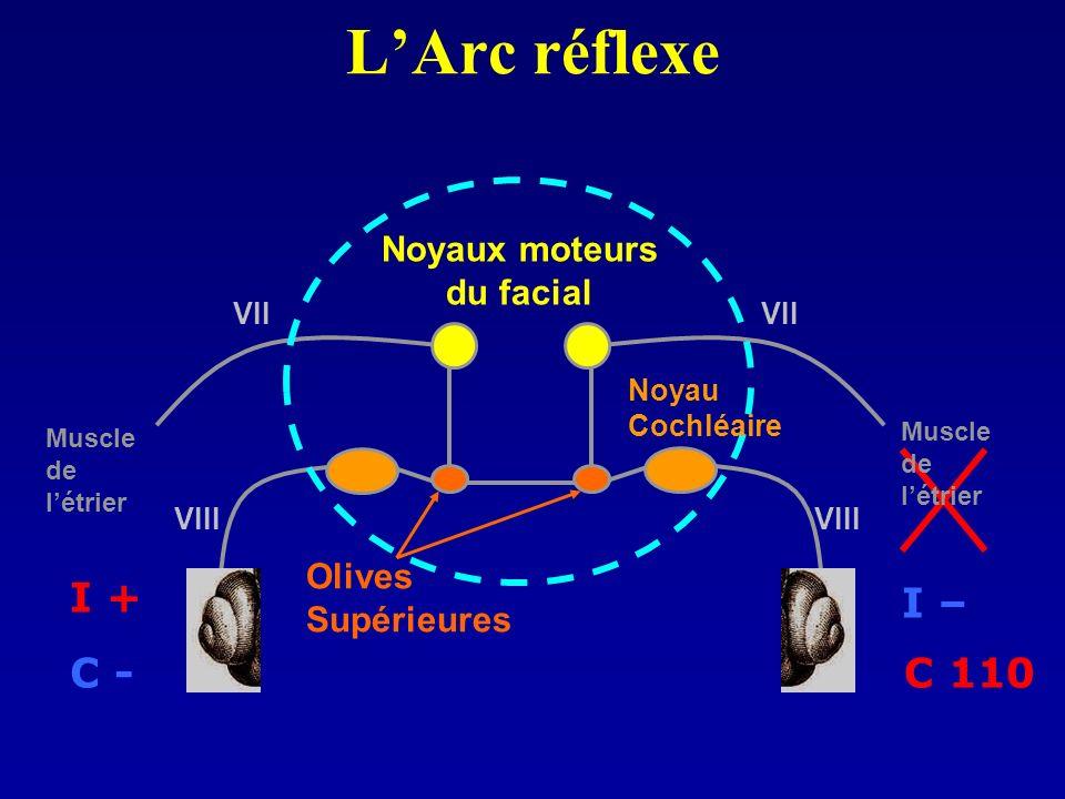 LArc réflexe Noyaux moteurs du facial Olives Supérieures I – C 110 I + C - Muscle de létrier Muscle de létrier Noyau Cochléaire VIII VII