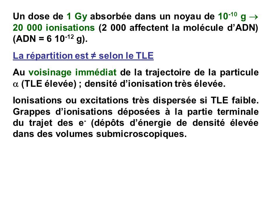 Un dose de 1 Gy absorbée dans un noyau de 10 -10 g 20 000 ionisations (2 000 affectent la molécule dADN) (ADN = 6 10 -12 g).