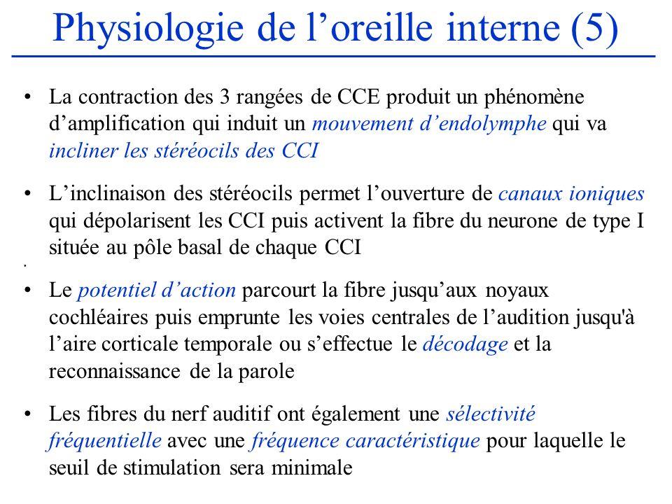 Physiologie de loreille interne (5) La contraction des 3 rangées de CCE produit un phénomène damplification qui induit un mouvement dendolymphe qui va
