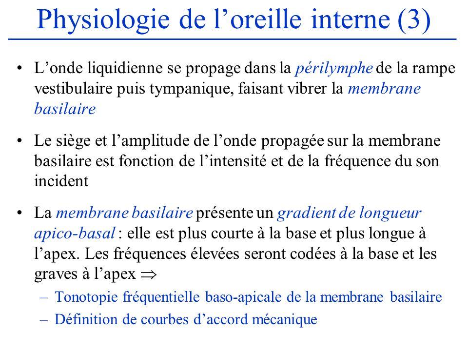 Physiologie de loreille interne (3) Londe liquidienne se propage dans la périlymphe de la rampe vestibulaire puis tympanique, faisant vibrer la membra