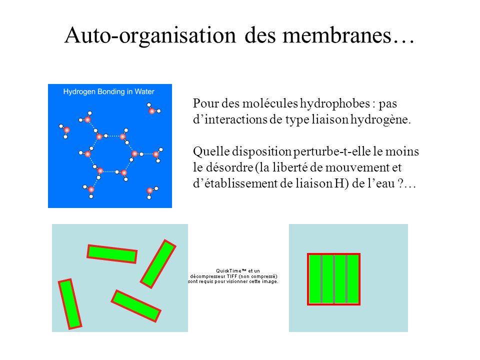 Auto-organisation des membranes… Pour des molécules hydrophobes : pas dinteractions de type liaison hydrogène. Quelle disposition perturbe-t-elle le m