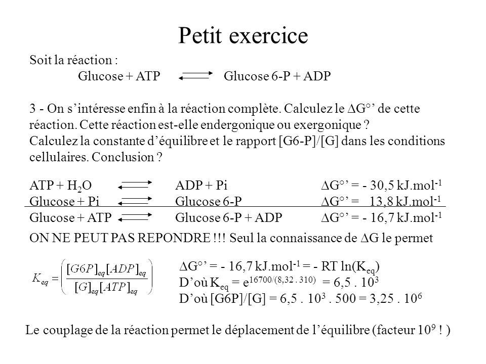 Petit exercice Soit la réaction : Glucose + ATPGlucose 6-P + ADP 3 - On sintéresse enfin à la réaction complète. Calculez le G° de cette réaction. Cet