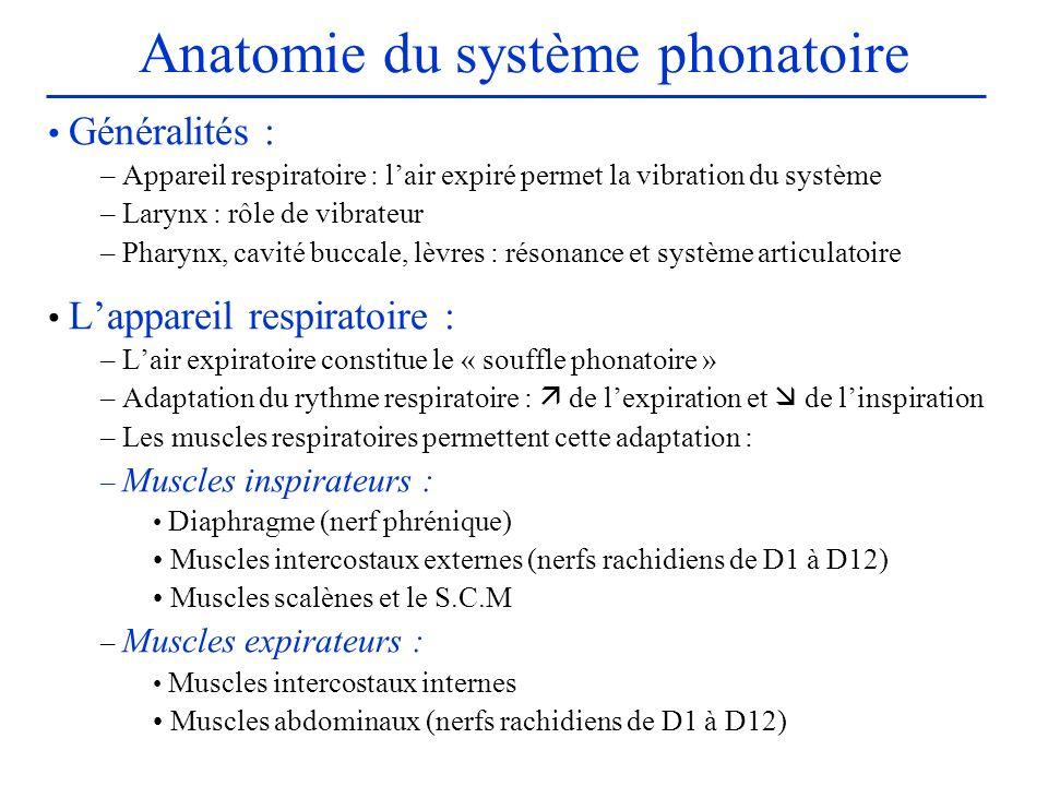 Anatomie du système phonatoire Généralités : – Appareil respiratoire : lair expiré permet la vibration du système – Larynx : rôle de vibrateur – Phary
