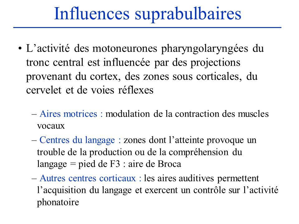 Influences suprabulbaires Lactivité des motoneurones pharyngolaryngées du tronc central est influencée par des projections provenant du cortex, des zo
