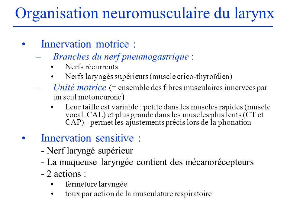 Organisation neuromusculaire du larynx Innervation motrice : –Branches du nerf pneumogastrique : Nerfs récurrents Nerfs laryngés supérieurs (muscle cr