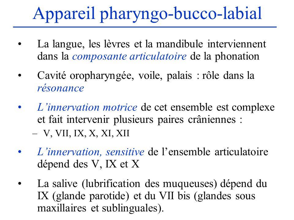 Appareil pharyngo-bucco-labial La langue, les lèvres et la mandibule interviennent dans la composante articulatoire de la phonation Cavité oropharyngé