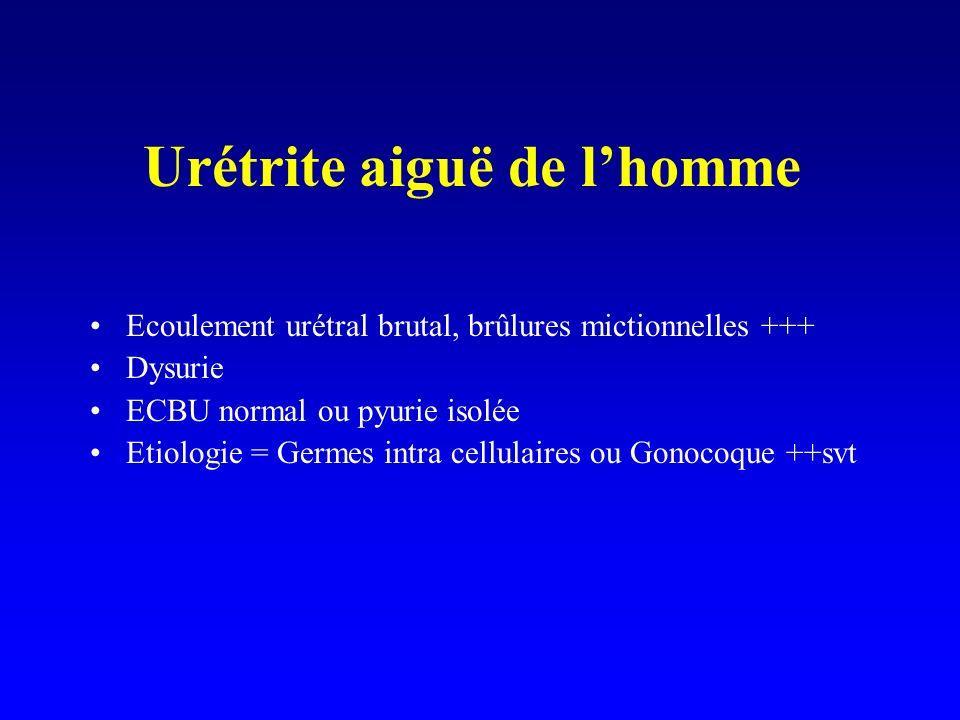 Urétrite aiguë de lhomme Ecoulement urétral brutal, brûlures mictionnelles +++ Dysurie ECBU normal ou pyurie isolée Etiologie = Germes intra cellulair