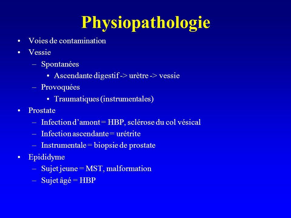 Physiopathologie Voies de contamination Vessie –Spontanées Ascendante digestif -> urètre -> vessie –Provoquées Traumatiques (instrumentales) Prostate