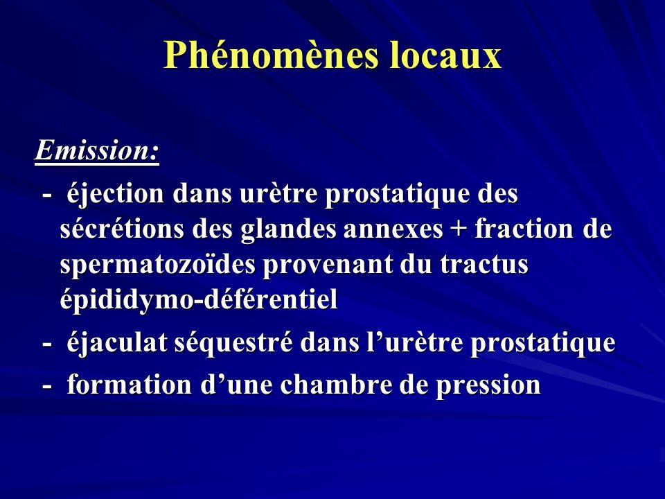 Phénomènes locaux Emission: - éjection dans urètre prostatique des sécrétions des glandes annexes + fraction de spermatozoïdes provenant du tractus épididymo-déférentiel - éjection dans urètre prostatique des sécrétions des glandes annexes + fraction de spermatozoïdes provenant du tractus épididymo-déférentiel - éjaculat séquestré dans lurètre prostatique - éjaculat séquestré dans lurètre prostatique - formation dune chambre de pression - formation dune chambre de pression