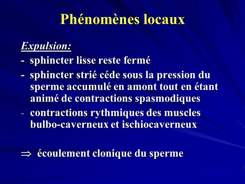 Phénomènes locaux Expulsion: - sphincter lisse reste fermé - sphincter strié céde sous la pression du sperme accumulé en amont tout en étant animé de contractions spasmodiques - contractions rythmiques des muscles bulbo-caverneux et ischiocaverneux écoulement clonique du sperme écoulement clonique du sperme