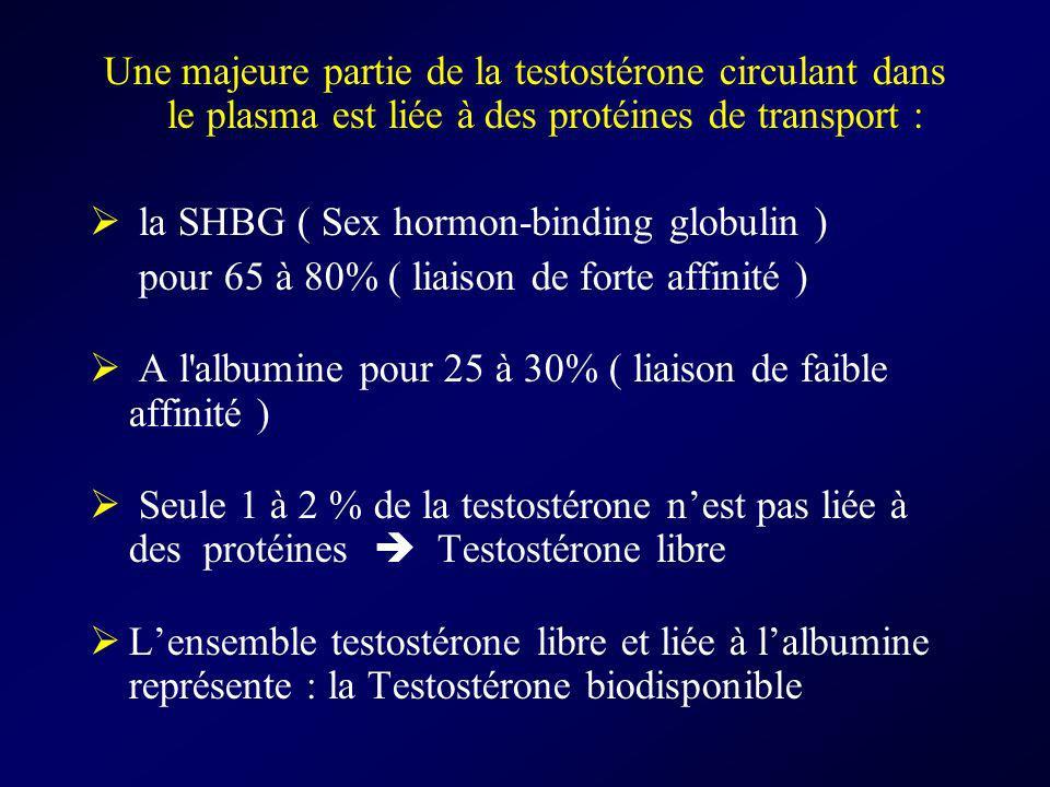 Une majeure partie de la testostérone circulant dans le plasma est liée à des protéines de transport : la SHBG ( Sex hormon-binding globulin ) pour 65