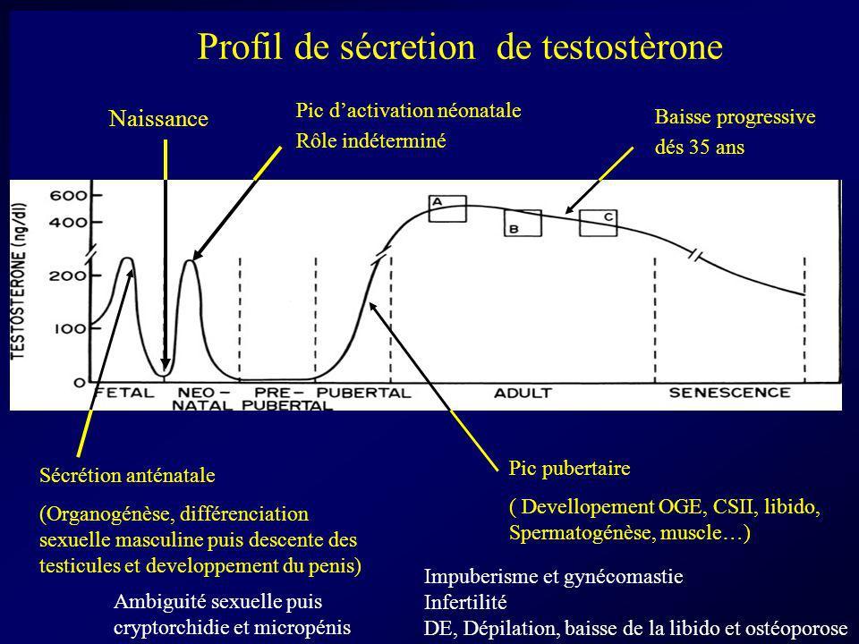 Pic dactivation néonatale Rôle indéterminé Naissance Baisse progressive dés 35 ans Pic pubertaire ( Devellopement OGE, CSII, libido, Spermatogénèse, m