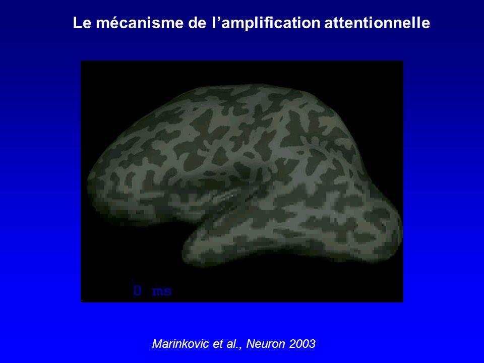Le mécanisme de lamplification attentionnelle Marinkovic et al., Neuron 2003