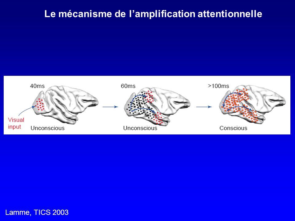 Lamme, TICS 2003 Le mécanisme de lamplification attentionnelle