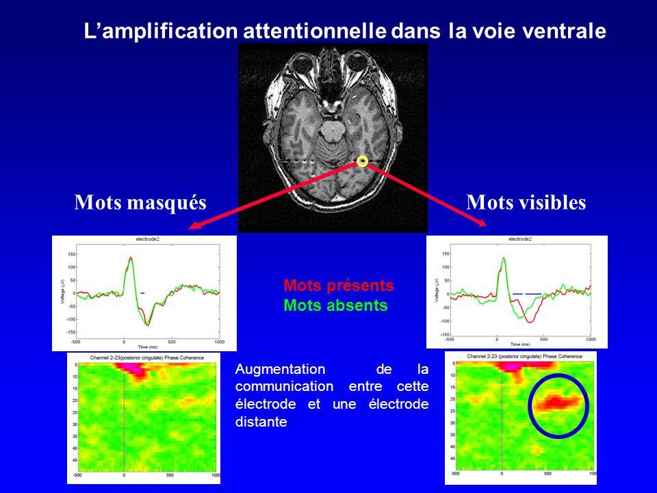 Augmentation de la communication entre cette électrode et une électrode distante Mots présents Mots absents Mots masqués Lamplification attentionnelle dans la voie ventrale Mots visibles