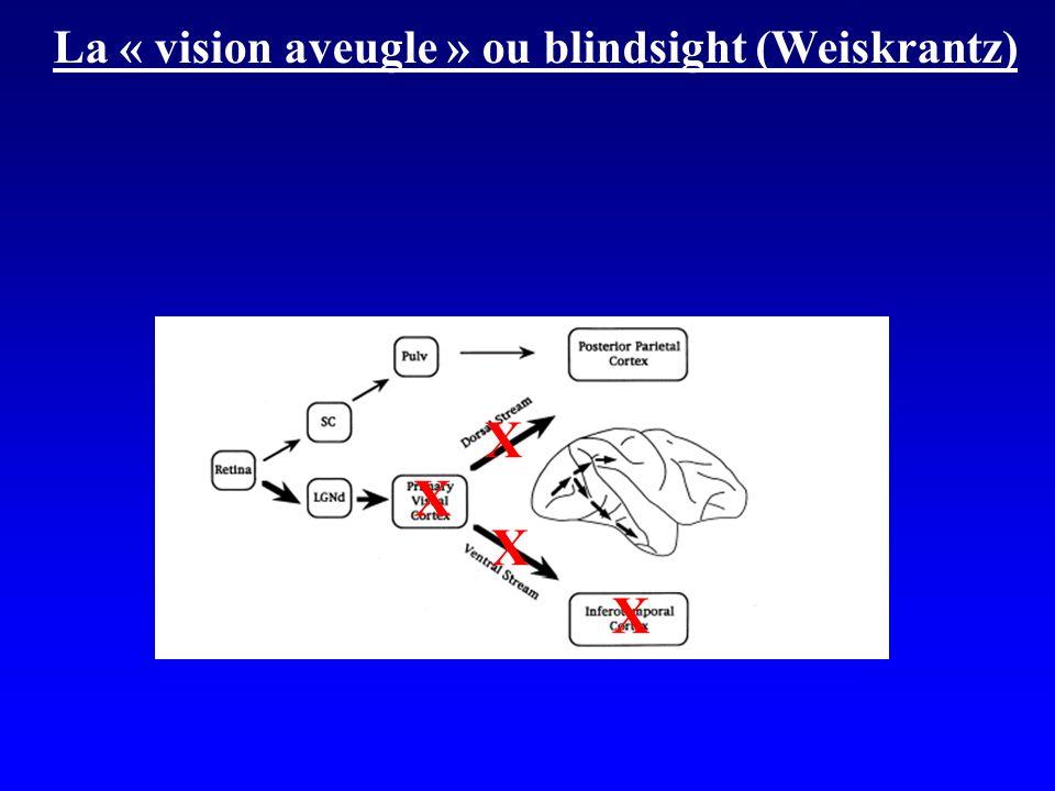 La « vision aveugle » ou blindsight (Weiskrantz) X X X X