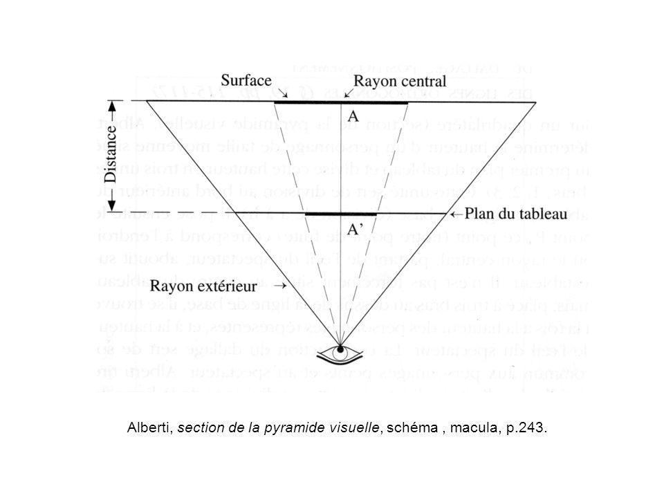 Alberti, section de la pyramide visuelle, schéma, macula, p.243.