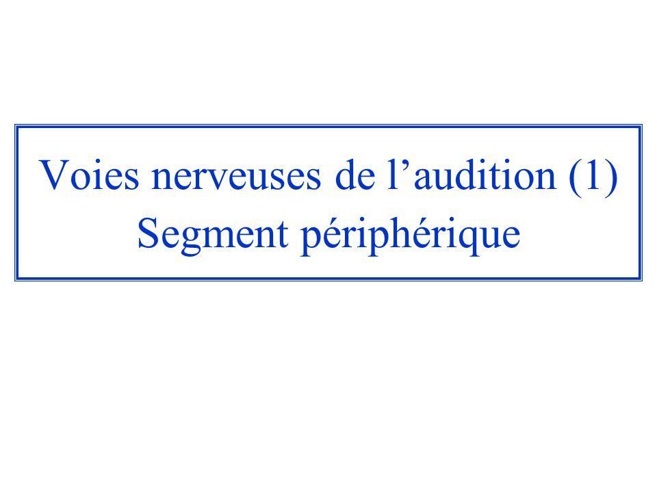 Voies nerveuses de laudition (1) Segment périphérique