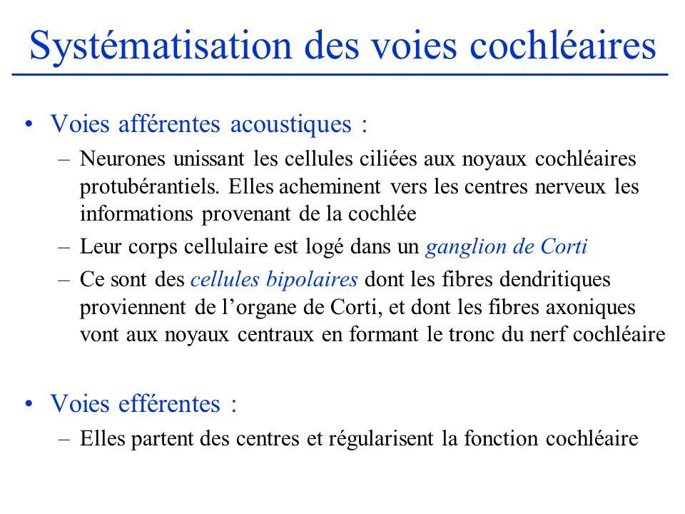 Systématisation des voies cochléaires Voies afférentes acoustiques : –Neurones unissant les cellules ciliées aux noyaux cochléaires protubérantiels. E