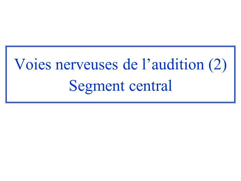 Voies nerveuses de laudition Organisation générale : –2 segments : un segment périphérique : le nerf auditif ou VIII è paire crânienne un segment central : dès leur entrée dans le tronc cérébral, les voies cochléaires et les voies vestibulaires se séparent.