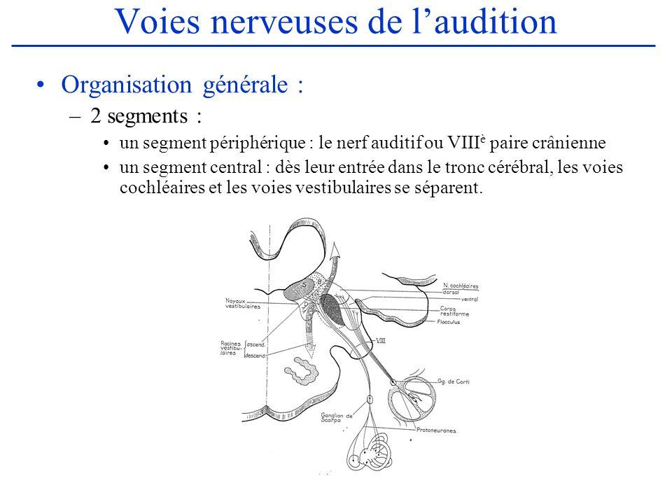 Les centres cochléaires Les fibres cochléaires se dirigent vers les noyaux gris bulbo-protubérantiels Les Noyaux Cochléaires : au nombre de 2 –Le noyau ventral : forme de pyramide à sommet inférieur, situé entre le bulbe et la protubérance Il reçoit la totalité des fibres cochléaires du VIII, à lexception de 2 faisceaux provenant du saccule et empruntant le nerf cochléaire De sa partie supérieure, naît la voie cochléaire ventrale ou sensorielle –Le noyau dorsal : De forme ovoïde, situé en arrière du noyau ventral, au contact du 4 è ventricule Il ne reçoit que des fibres du noyau ventral