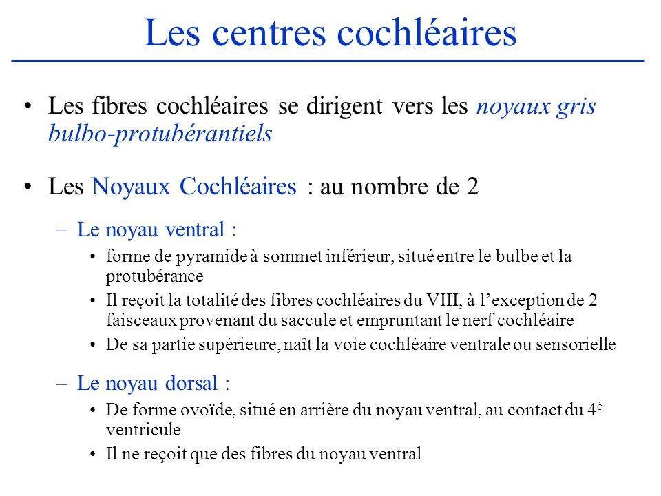 Les centres cochléaires Les fibres cochléaires se dirigent vers les noyaux gris bulbo-protubérantiels Les Noyaux Cochléaires : au nombre de 2 –Le noya