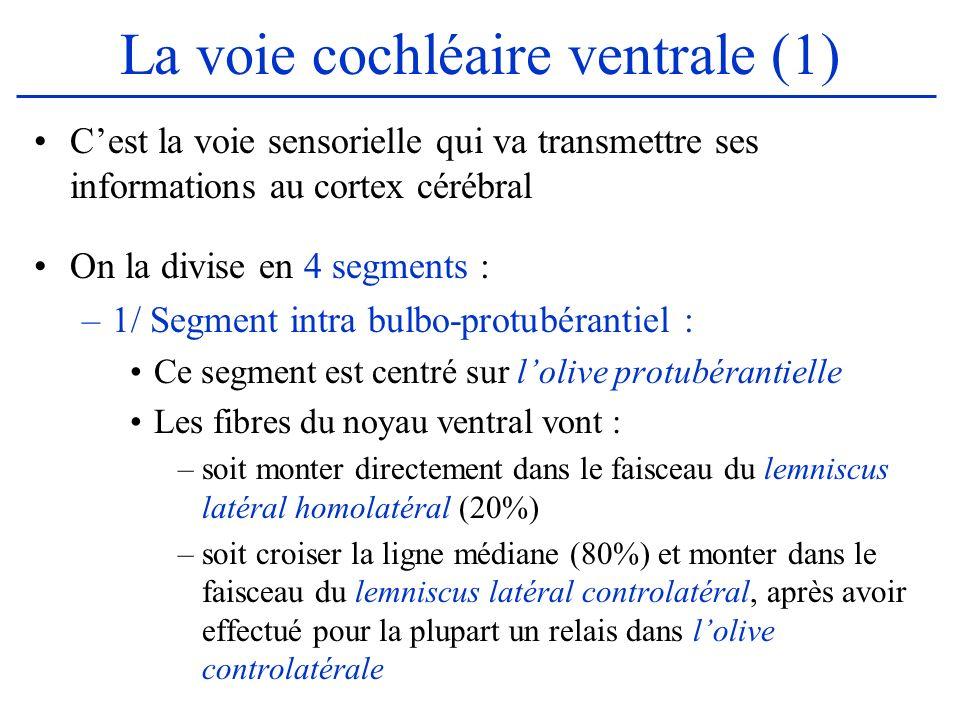 La voie cochléaire ventrale (1) Cest la voie sensorielle qui va transmettre ses informations au cortex cérébral On la divise en 4 segments : –1/ Segme
