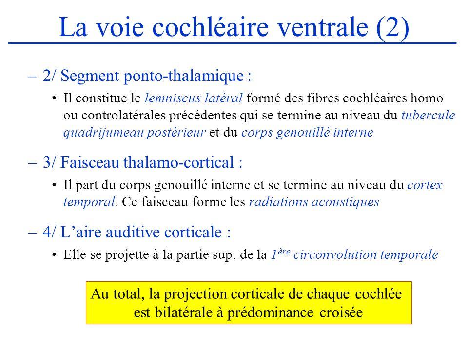 La voie cochléaire ventrale (2) –2/ Segment ponto-thalamique : Il constitue le lemniscus latéral formé des fibres cochléaires homo ou controlatérales