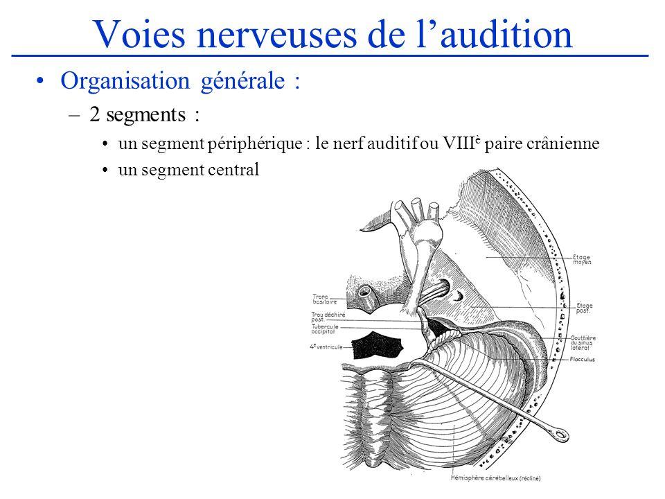 Le nerf acoustique (1) Généralités : Le VIII est formé de 2 nerfs : –nerf cochléaire : voie sensorielle auditive –nerf vestibulaire : voie réflexe de léquilibre –Il est entièrement intra-crânien Origine apparente : –Naît de la fossette latérale du bulbe, à lextrémité externe du sillon bulbo pontique.