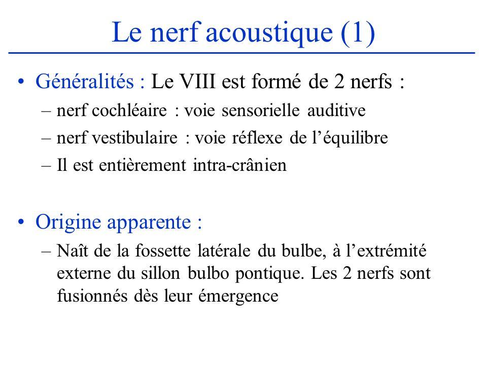 Le nerf acoustique (1) Généralités : Le VIII est formé de 2 nerfs : –nerf cochléaire : voie sensorielle auditive –nerf vestibulaire : voie réflexe de
