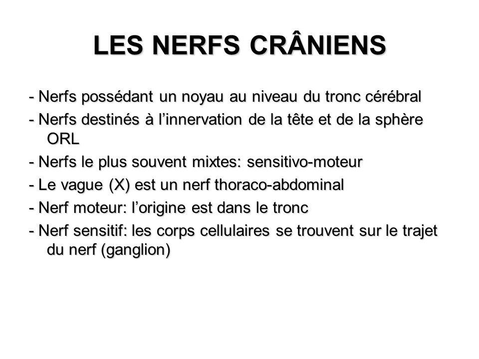LES NERFS CRÂNIENS - Nerfs possédant un noyau au niveau du tronc cérébral - Nerfs destinés à linnervation de la tête et de la sphère ORL - Nerfs le pl