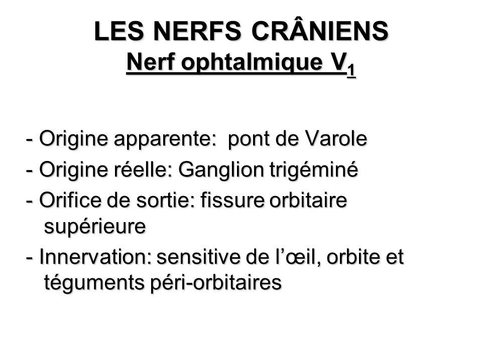 LES NERFS CRÂNIENS Nerf ophtalmique V 1 - Origine apparente: pont de Varole - Origine réelle: Ganglion trigéminé - Orifice de sortie: fissure orbitair
