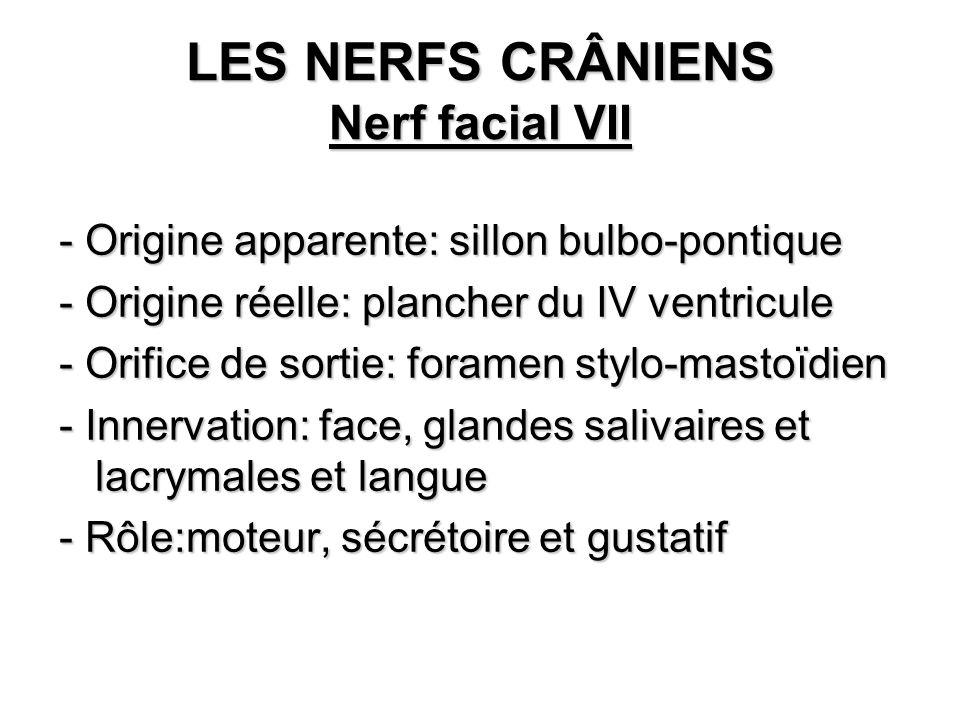 LES NERFS CRÂNIENS Nerf facial VII - Origine apparente: sillon bulbo-pontique - Origine réelle: plancher du IV ventricule - Orifice de sortie: foramen