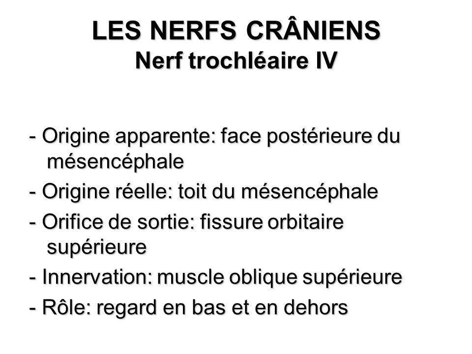 LES NERFS CRÂNIENS Nerf trochléaire IV - Origine apparente: face postérieure du mésencéphale - Origine réelle: toit du mésencéphale - Orifice de sorti