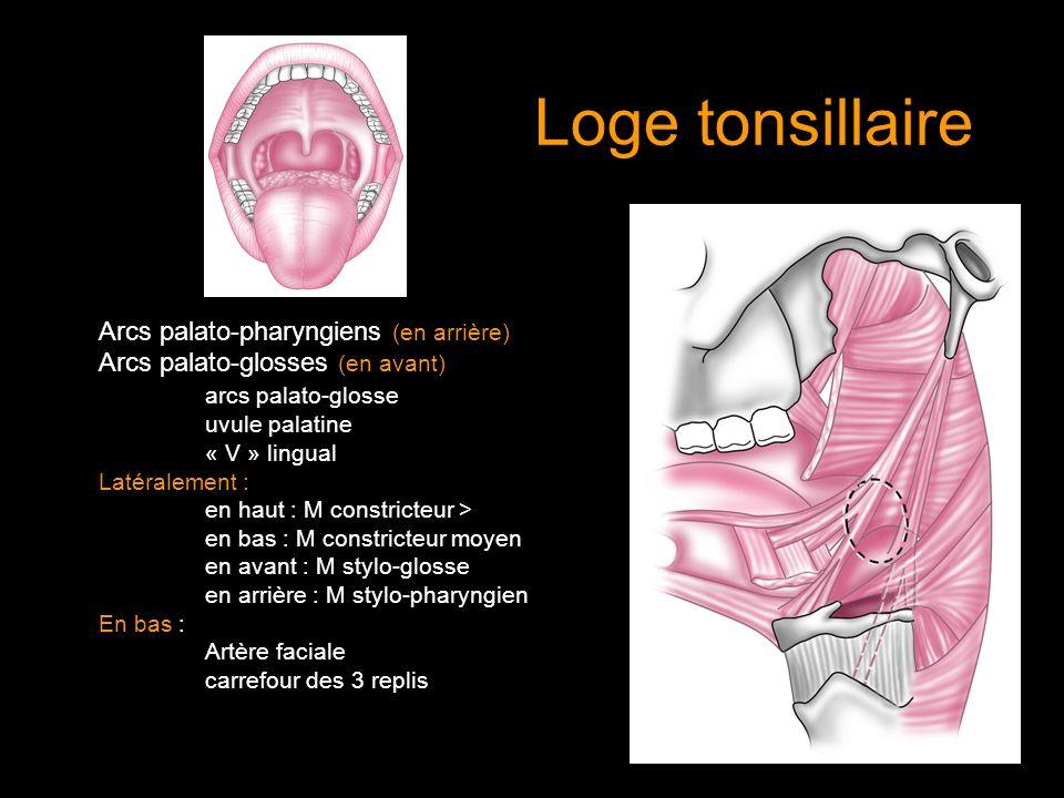 Loge tonsillaire Arcs palato-pharyngiens (en arrière) Arcs palato-glosses (en avant) arcs palato-glosse uvule palatine « V » lingual Latéralement : en